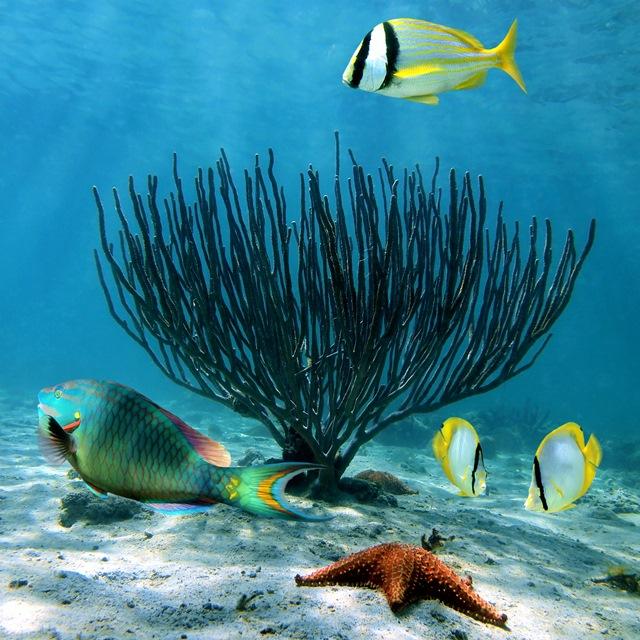 Florianópolis Scuba Diving | © Shutterstock